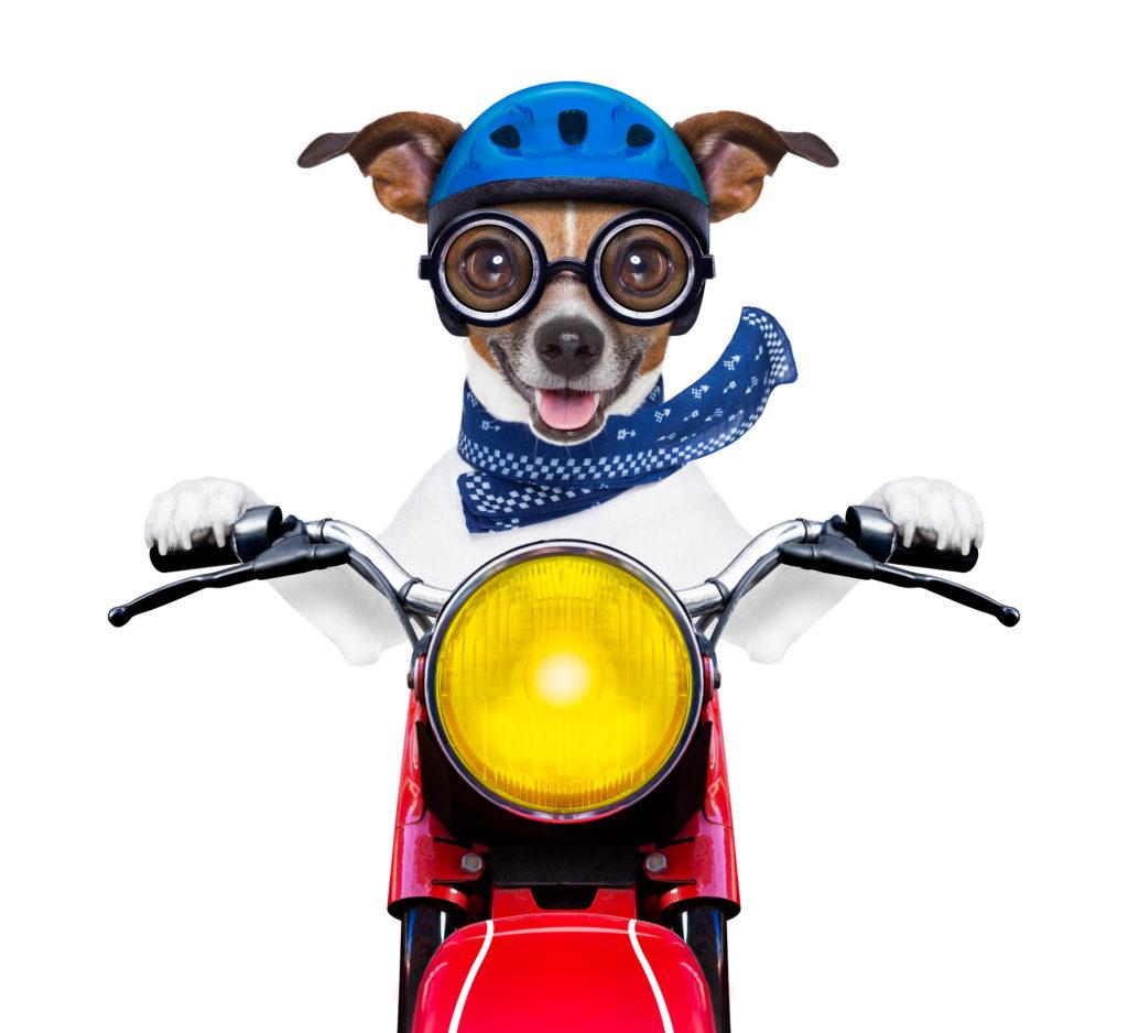 puppy transportation services